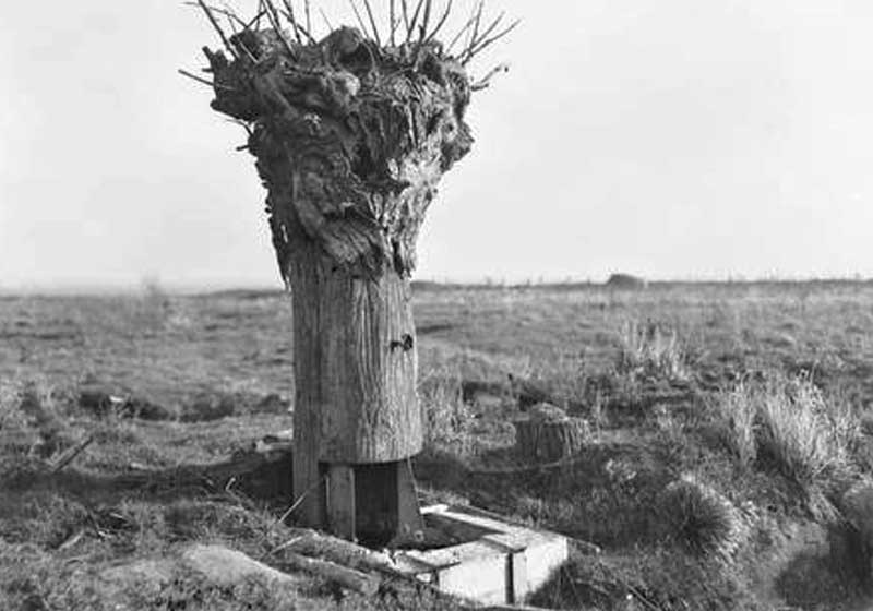 Dummy tree observation post on hill 63